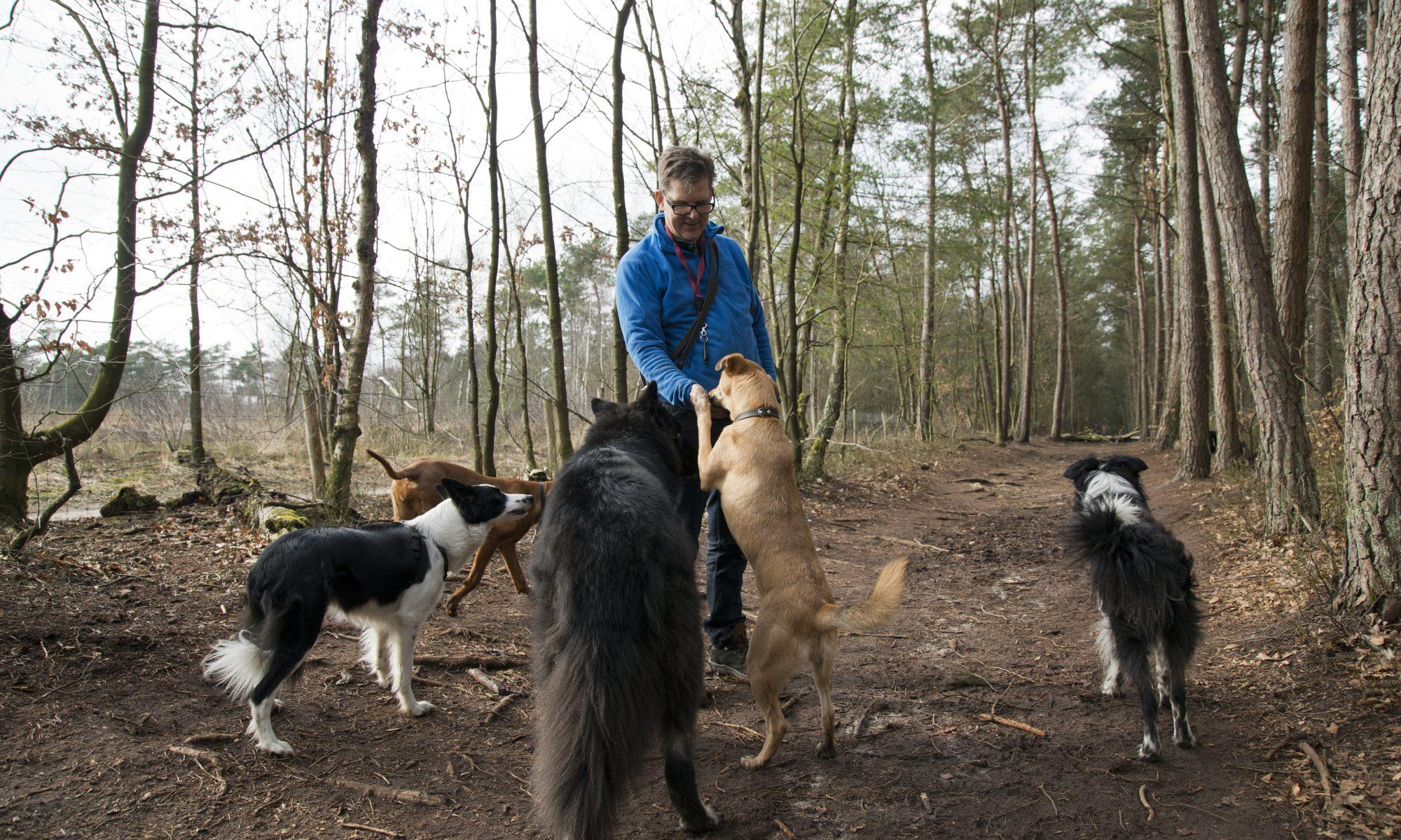 Hondenuitlaatservice in Apeldoorn en omstreken - Mee met Hans