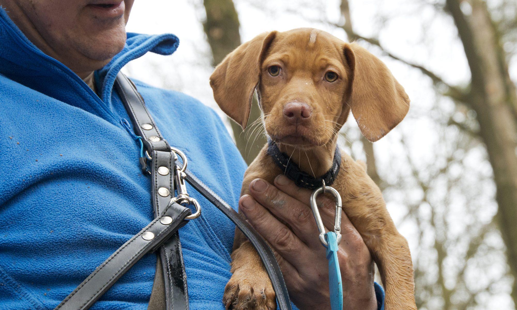 """Puppy's - hondenuitlaatservice """"Mee met Hans"""""""